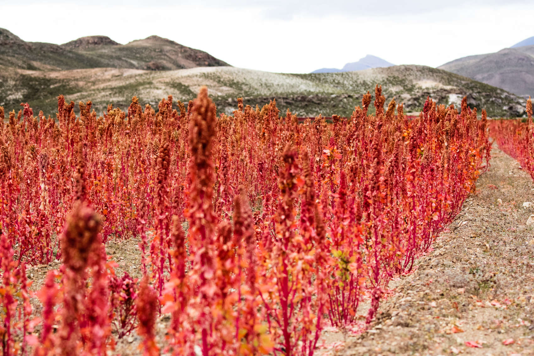 What Is Quinoa? Learn More At Aqotango
